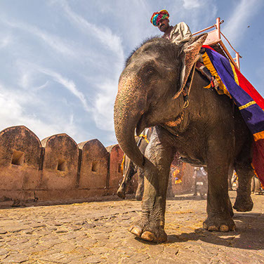 RAJASTHAN riding elephant